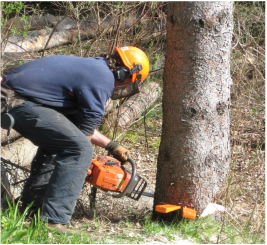 Tree Felling Omagh